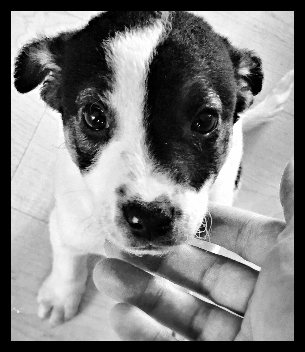 dlmata nuevas guas perros de raza