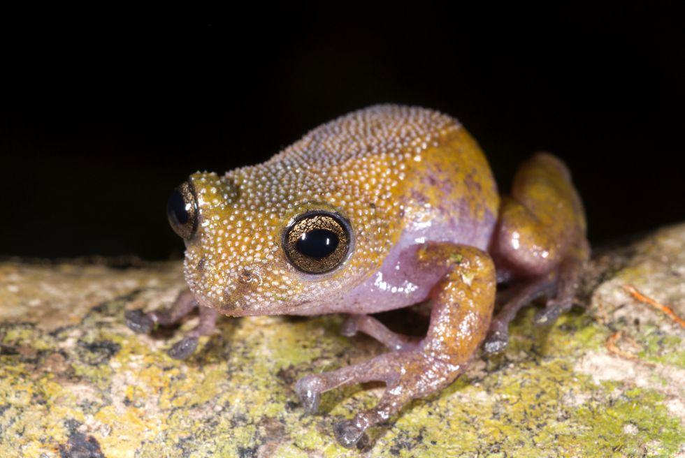 Fotos: La rana que cambia de color y otros tesoros ocultos del Gran ...