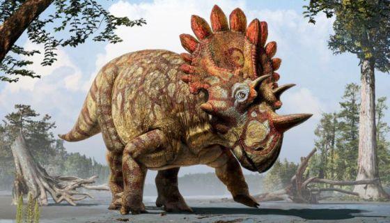 Hellboy El Nuevo Rey De Los Triceratops Ciencia El Pais En este capitulo nos centramos en el prognathodon un. hellboy el nuevo rey de los
