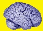 ¿Por qué somos más inteligentes que las ranas?