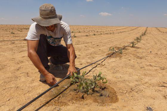 Israel um para so cient fico em situa o excepcional for Usda rural development louisiana