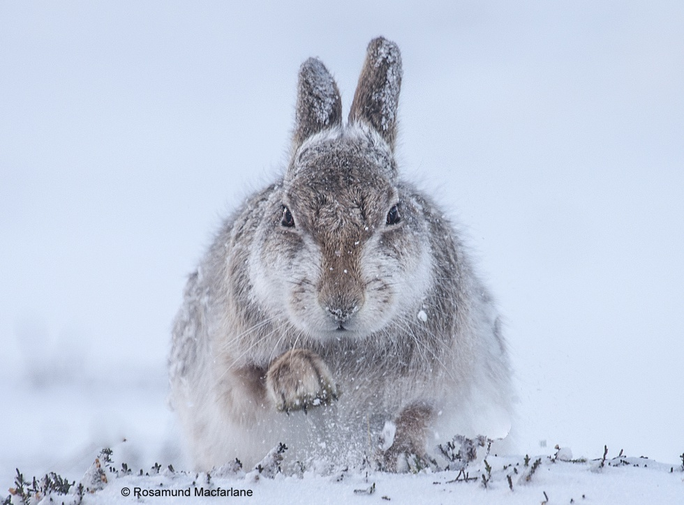 Las mejores fotos de naturaleza del año