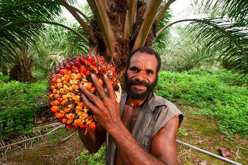 el aceite de palma que es