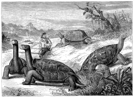 Resultado de imagen de darwin islas galápagos