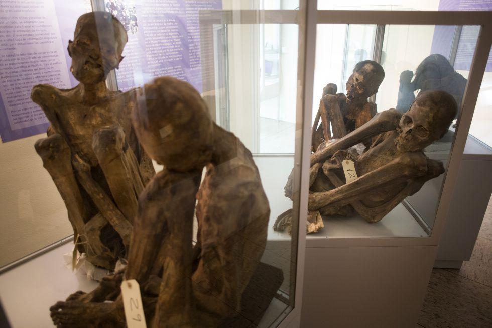 Sala de momias del museo Reverte Coma. La sala de momificaciones reúne ejemplares andinos y egipcios. Es una buena muestra del intento humano y universal de alcanzar la eternidad por medio de la conservación del cuerpo después de la muerte. Al menos alcanzaron la eternidad en este museo.