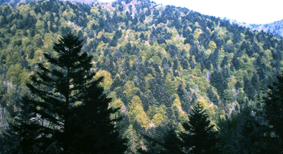 La Gestión De Los Bosques En Europa Está Empeorando El