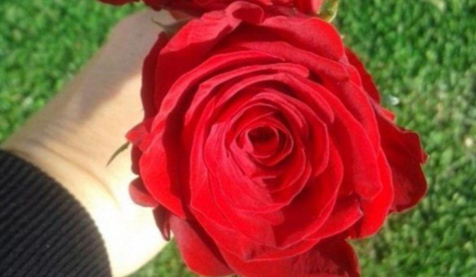 San Valentín Cuando Regalar Una Rosa Roja Está Castigado Estilo