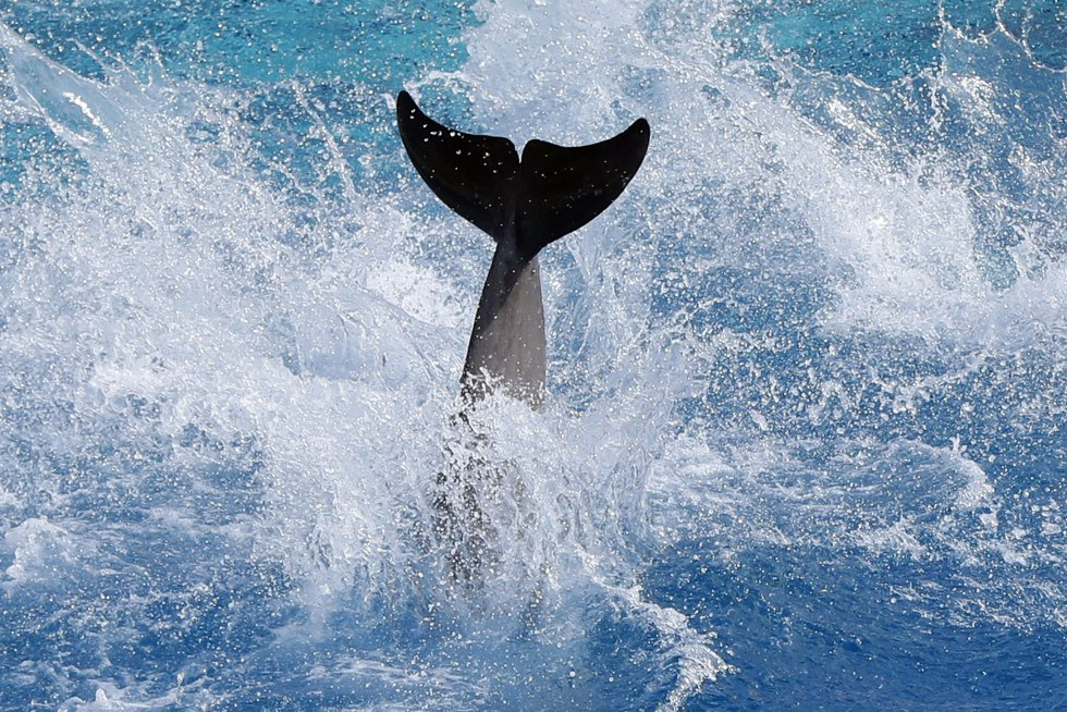 Fotos retrato de marzo actualidad el pa s for Piscina delfin madrid