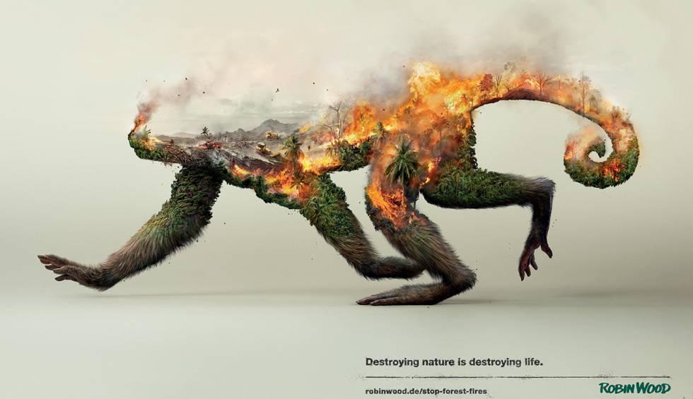 medio ambiente la denuncia de un mono en llamas planeta futuro el pa s. Black Bedroom Furniture Sets. Home Design Ideas