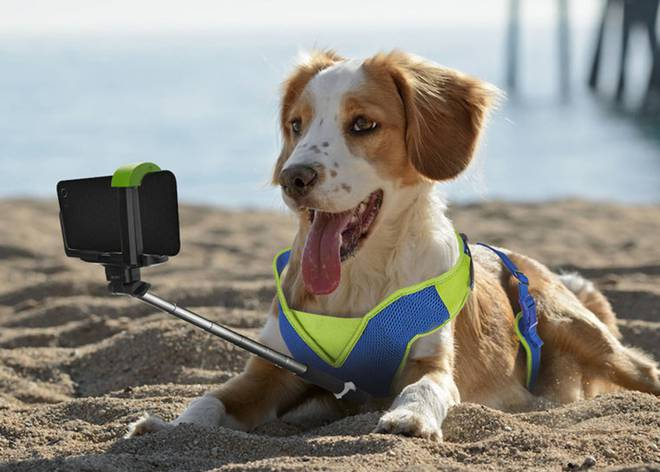 Calendario Perruno.Perros El Tripadvisor Perruno Y Otras Cinco Apps Para