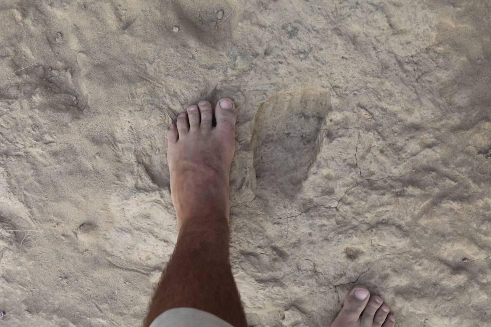 Otra especie humana ya caminaba como nosotros hace 1,5 millones de ...