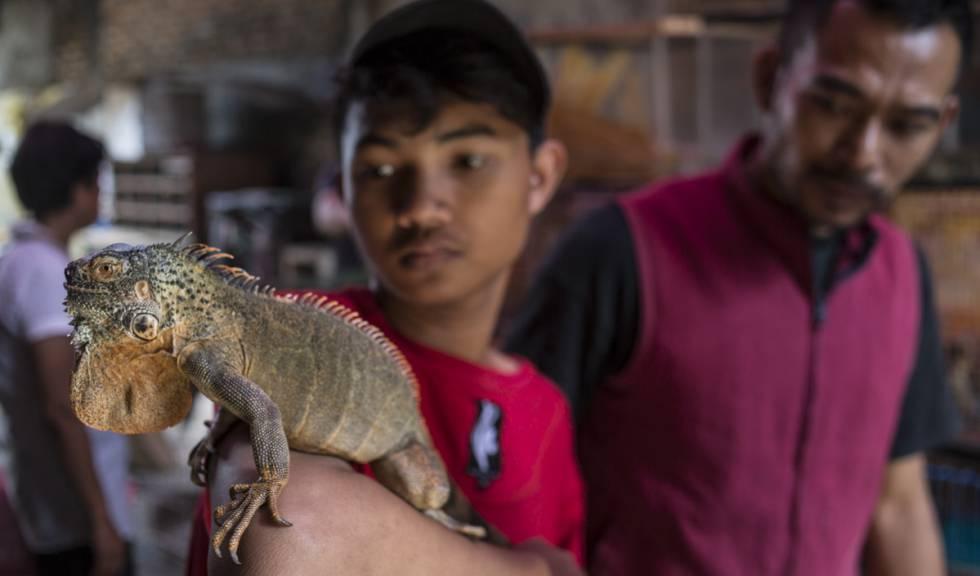 Trafico Animal En Indonesia Mire Al Pajarito Y Comprelo