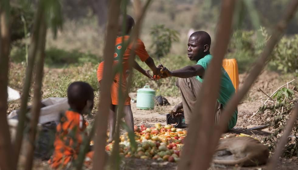 Resultado de imagen de deforestación en niger