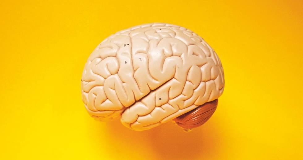 El cerebro alimentos que rejuvenecen