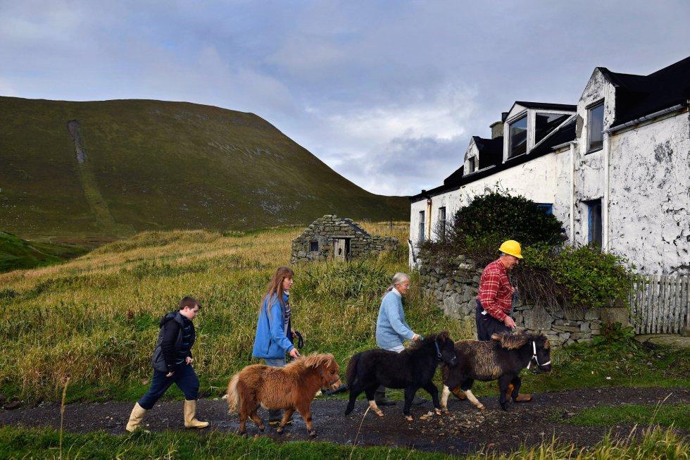 Jack, Penny, Sheila y Jim Grear pasean a sus ponis a la isla de Foula, donde serán transportados hacia el mercado de la isla de Shetland.