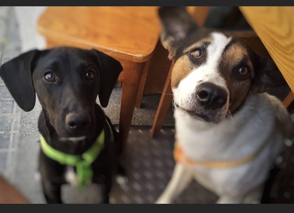 6fe8326fa3 Debo castrar a mi perro? | Blog AnimalesyCia | EL PAÍS