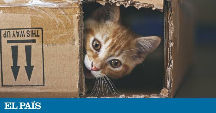 Diez cosas raras de los gatos (y que les hacen irresistibles)  75deb0cabbc3a