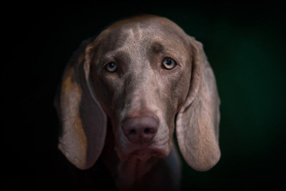 Fotos Los Perros Más Guapos Del Mundo Actualidad El País