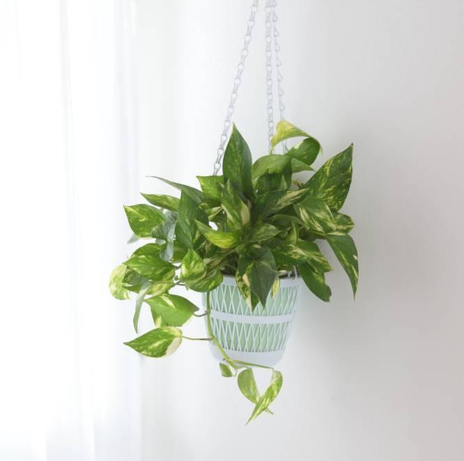 Fotorrelato diez plantas bonitas de interior a prueba de asesinos de plantas icon el pa s - Plantas de interior grandes ...