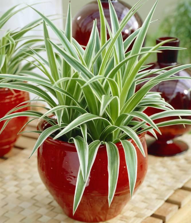 Fotorrelato diez plantas bonitas de interior a prueba de for Plantas de interior muy duraderas