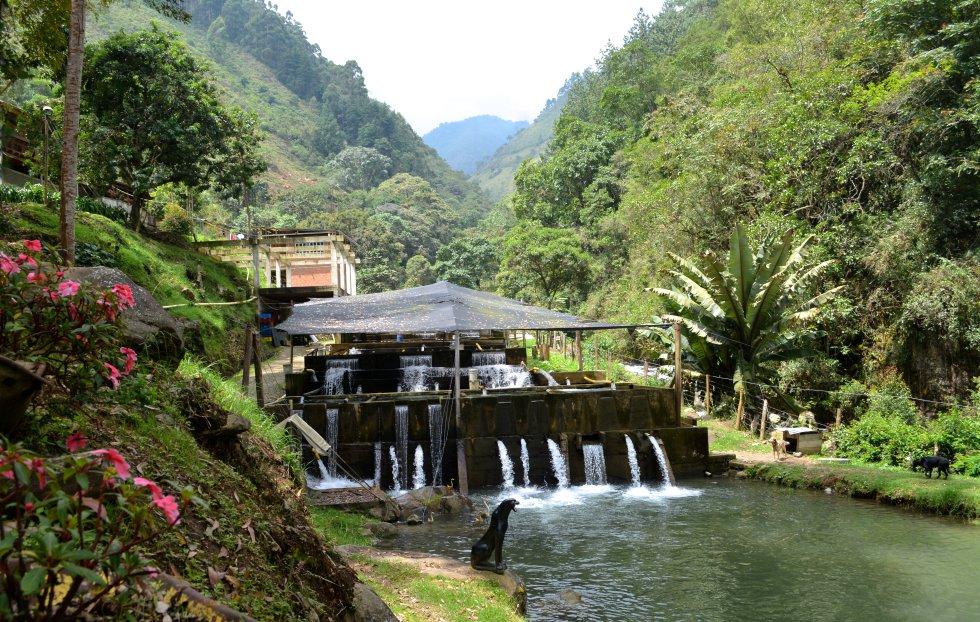 Fotos: El pescado del proceso de paz colombiano | Planeta Futuro ...