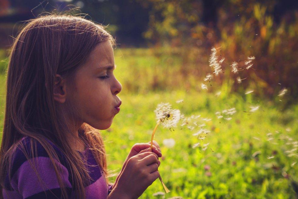 """Las plantas son inteligentes Tras las hojas y raíces de las plantas que habitan en nuestra casa hay un mundo fascinante de estrategias para sobrevivir y tener presencia en el planeta. Los seres vegetales utilizan técnicas sorprendentes para transportar su polen lo más lejos posible. """"Hay plantas que se dispersan por el viento, otras por el agua o a través de los animales, pegadas a su piel, pelo o pezuñas. De hecho, el velcro, es un invento copiado del mundo vegetal"""", añade Pardo. La capacidad de adaptación de los seres vegetales es sorprendente y una característica inherente a la inteligencia. """"Son brillantes a la hora de adoptar soluciones frente a las dificultades inherentes a su existencia y conscientes de lo que son y de lo que las rodea"""", añade Mancuso."""