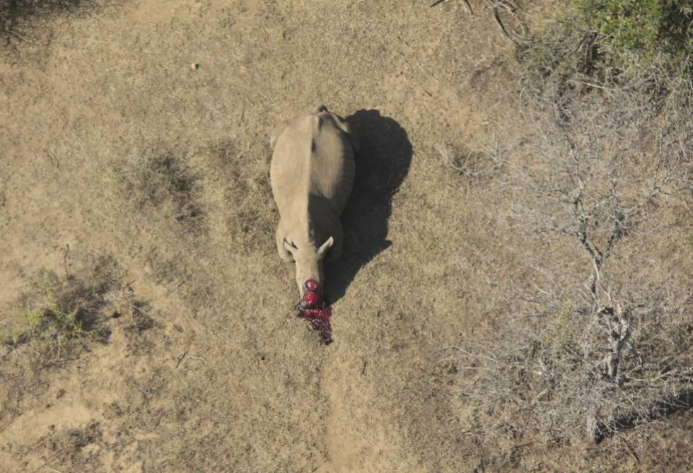 """""""En diez años no quedarán cuernos de rinoceronte con los que traficar"""""""