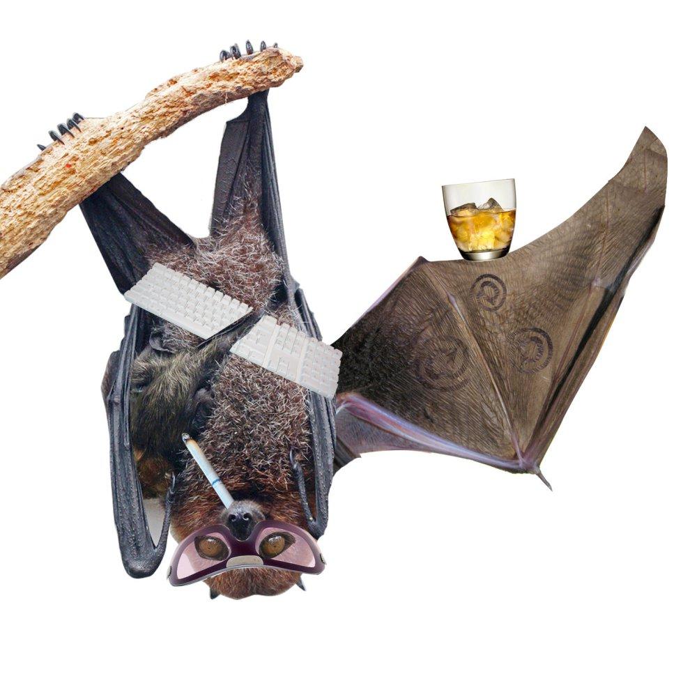 """Aunque no es un ave, pero vuela. El murciélago digital aprovecha la noche para difundir sus mensajes. Tuitean de una forma """"canalla e inteligente""""."""