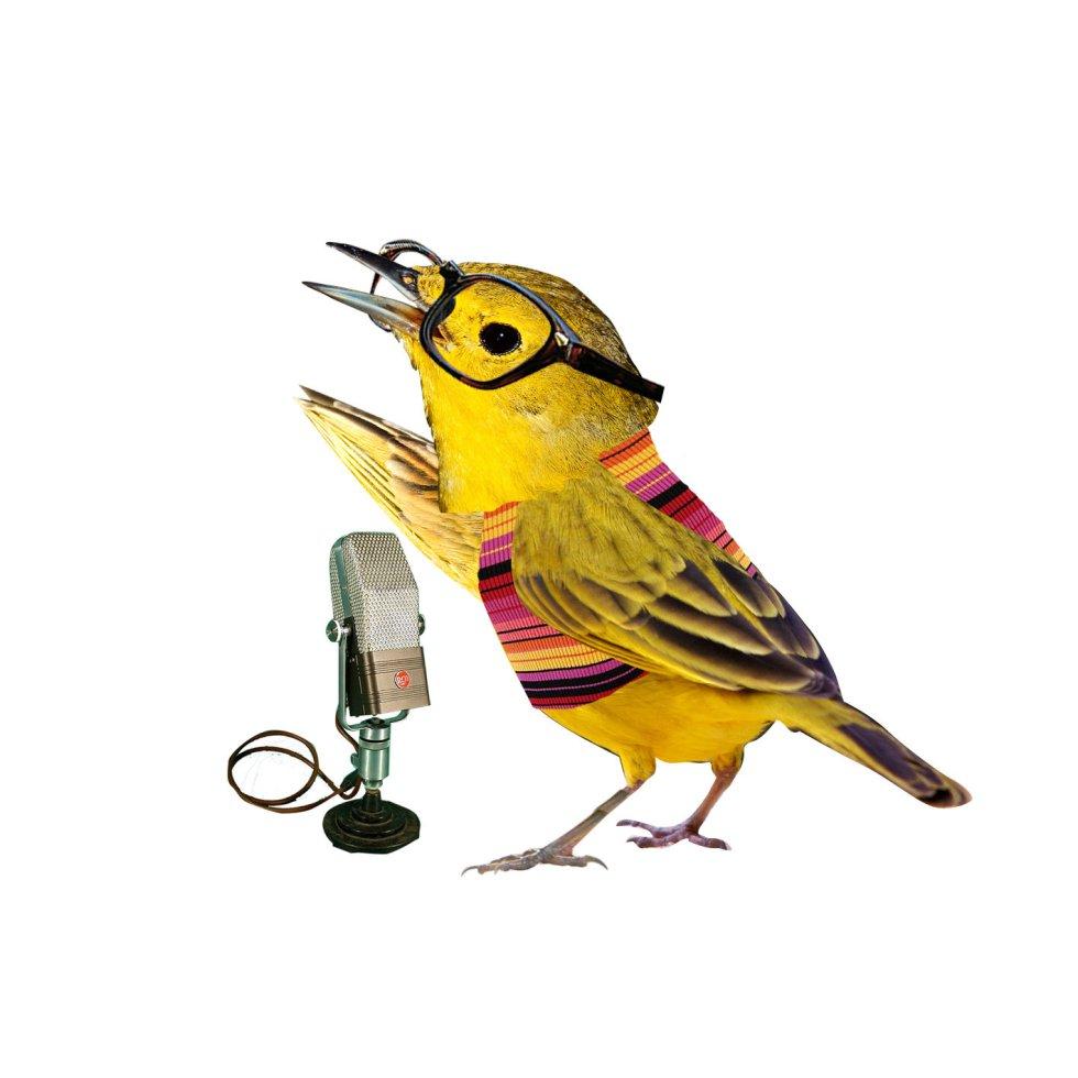 El canario por su canto y color representa a los artistas, músicos...