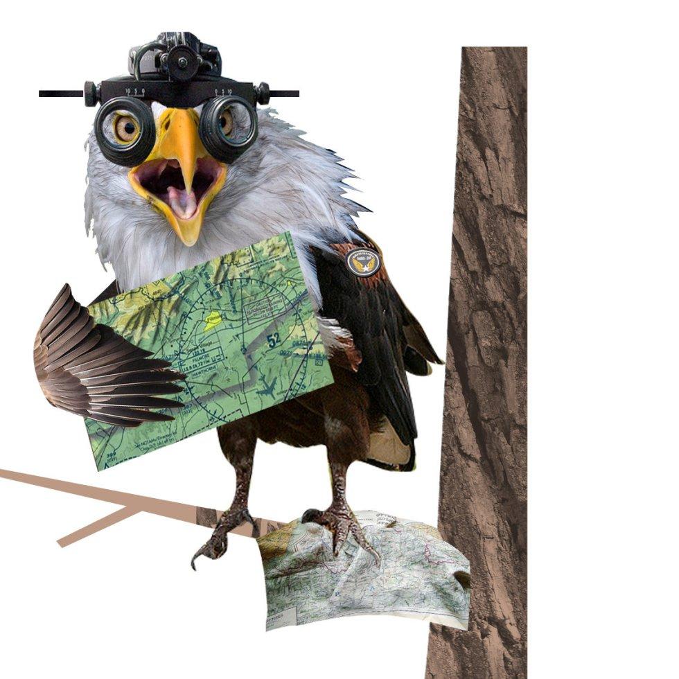 Un libro como 'Aviario' permite descubrir de qué especie somos en Internet. El águila siempre está ojo avizor, así que saca lo mejor de la Red y lo muestra a los demás.