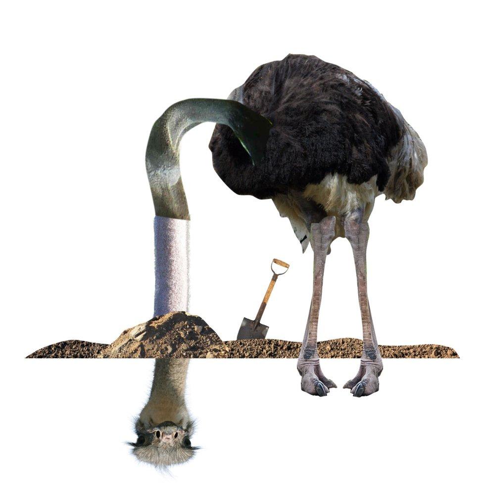 """Cierra esta muestra del 'Aviario' el avestruz. """"Timoratos, apocados, sueltan sus mensajes en las redes y desaparecen""""."""
