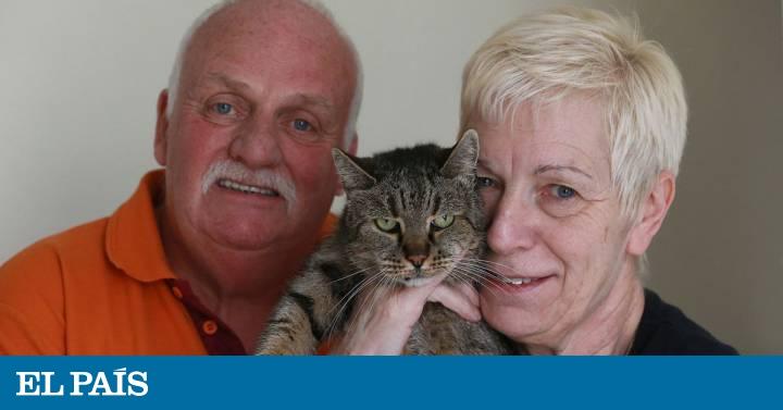 Muere Nutmeg El Gato Más Viejo Del Mundo A Los 32 Años Blog Mundo Animal El País