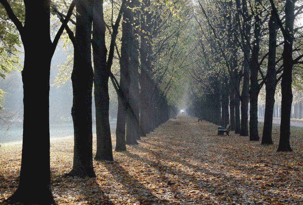Los primeros rayos de luz aparecen al amanecer entre un paseo de tilos de Hanóver (Alemania).