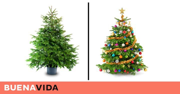 4053ae142af Olvídese del abeto  este es el árbol de Navidad que debería comprar este  año