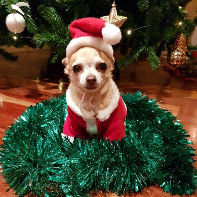 Fotos Casas Decoradas Navidad.Fotos Ya Es Navidad En Casa De Los Famosos Gente Y