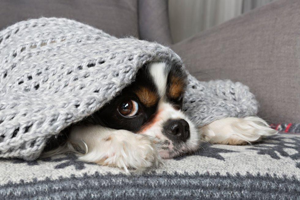 Fotorrelato 7 trucos para calentar la casa sin encender - Calentar la casa ...