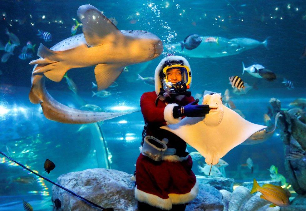 Una Papá Noel dando de comer a los peces del acuario de Tokio, Japón.