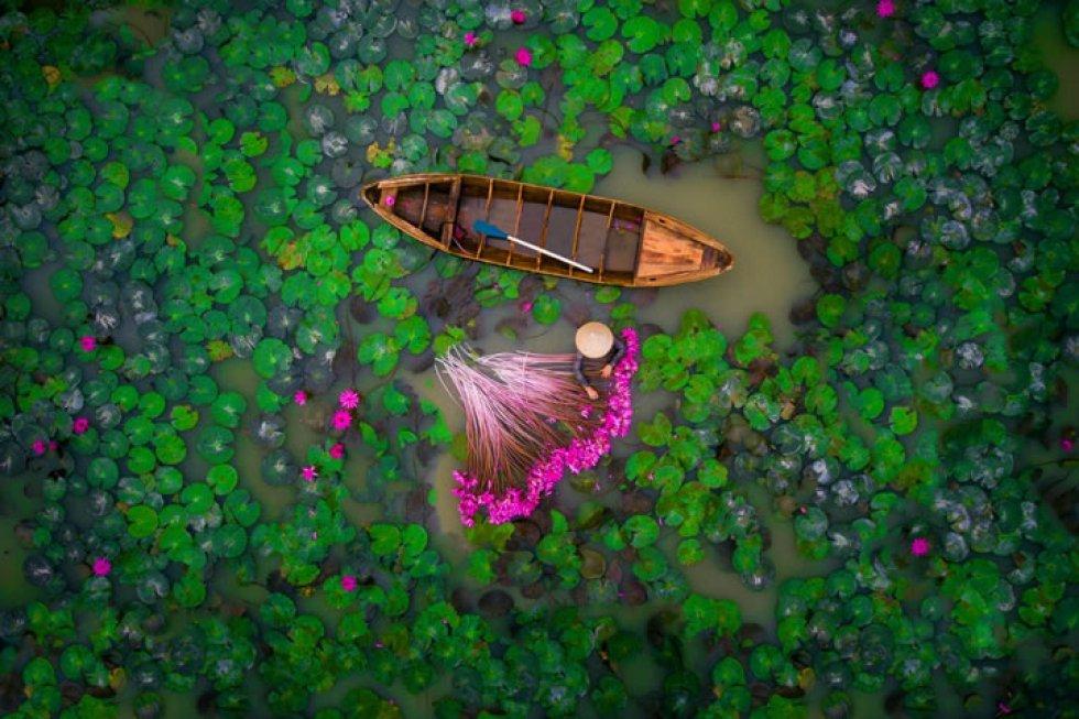 'Waterlily': una mujer cosecha lirios de agua en un estanque en el delta del Mekong en Vietnam.