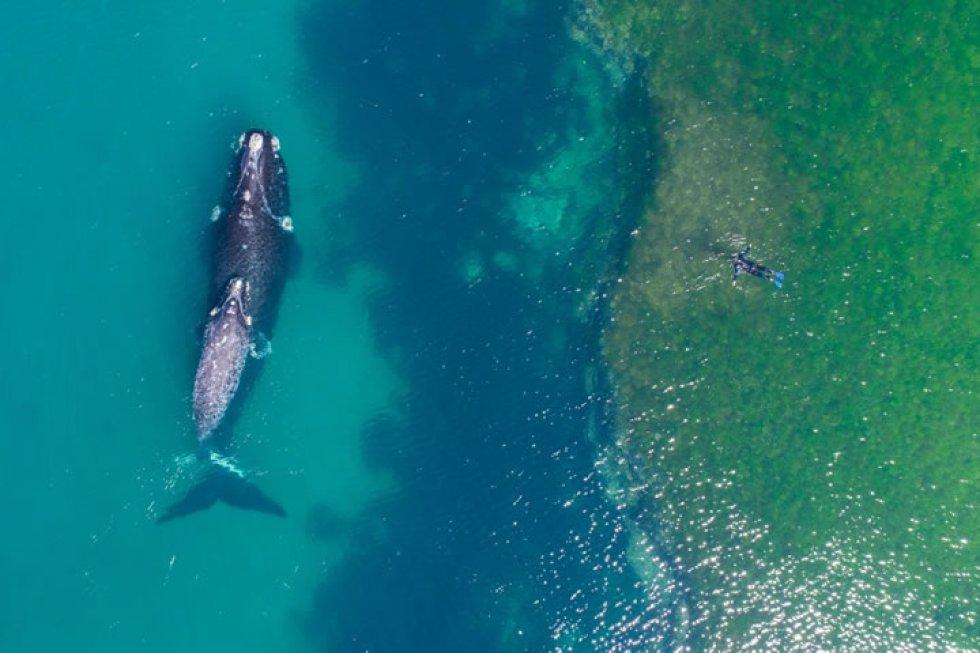 Nadando con una ballena.