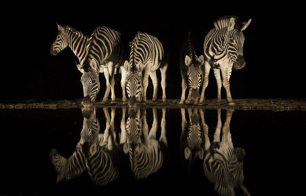 Charl Senekal fotografió este grupo de cebras en un río de Zimanga, en el sur de África, durante la estación seca.