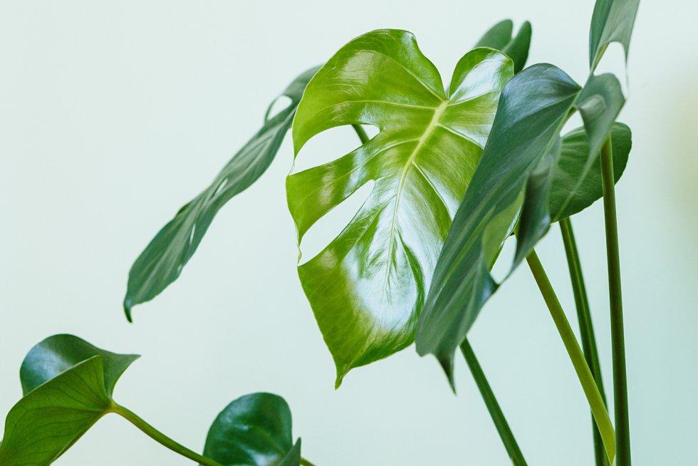 plantas oxigeno