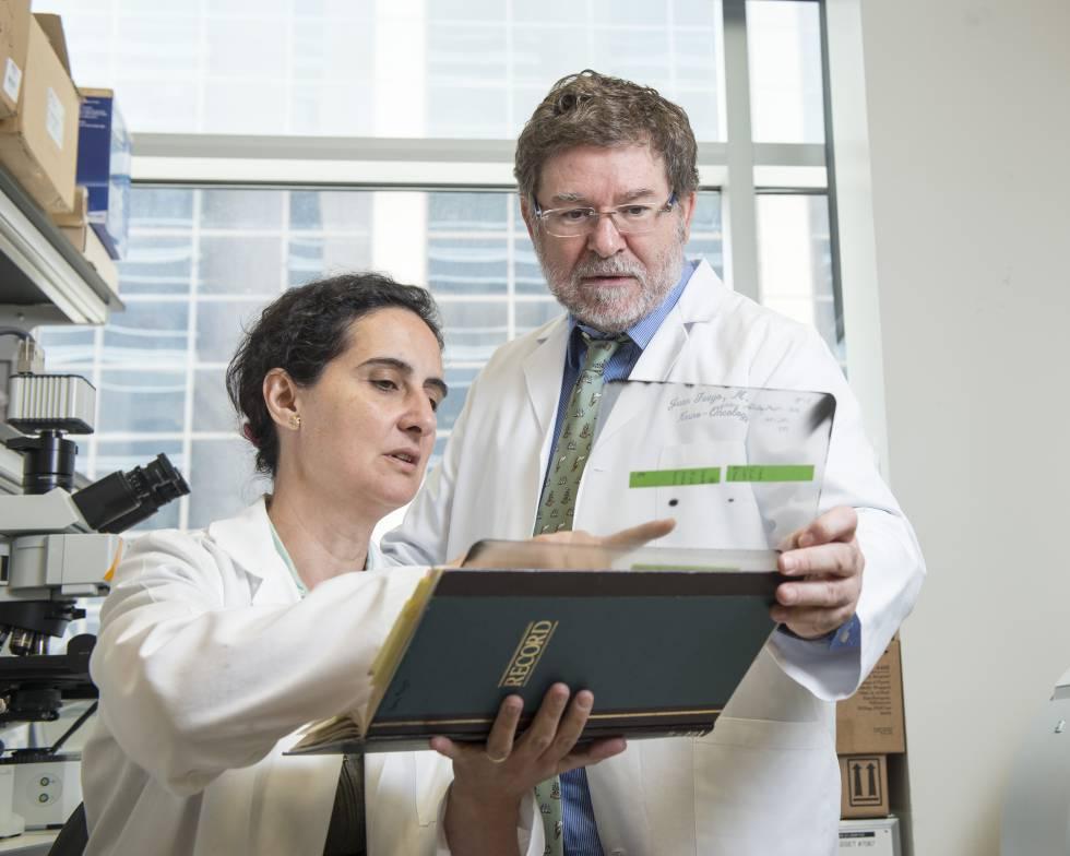 Una inmunoterapia con virus frena al cáncer cerebral más letal