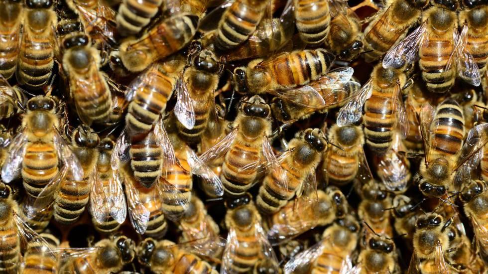 Las guerra civil de las abejas