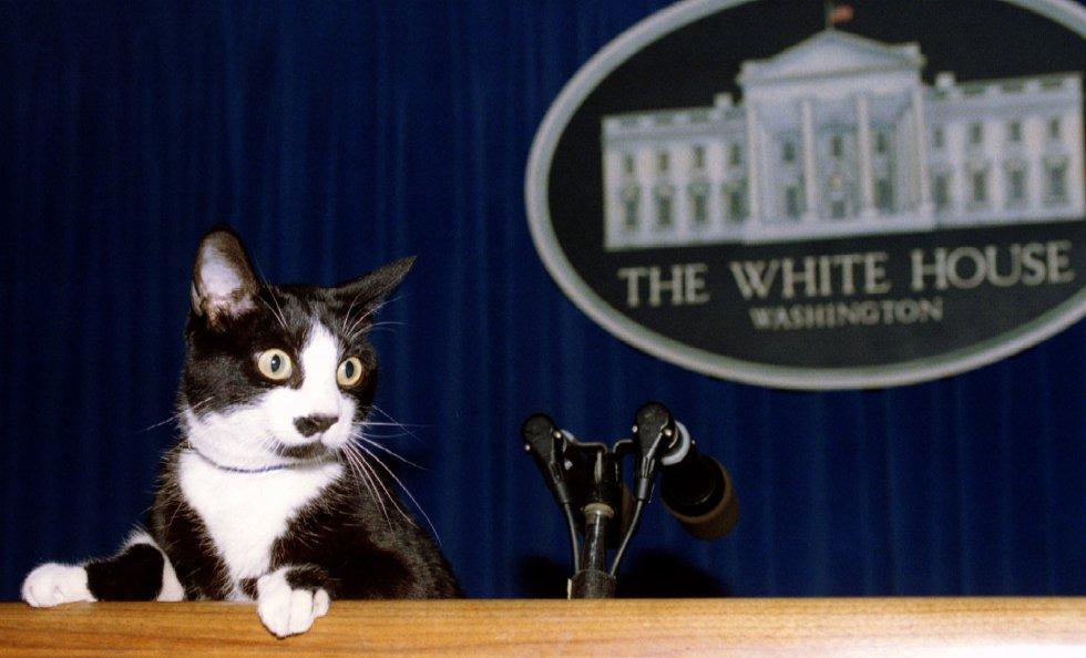 ¿Por qué se conmemora el Día Internacional del Gato? (VIDEOS)