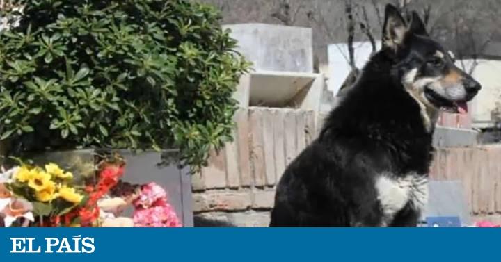 Morre Capitán, o cão que passou 11 anos visitando o túmulo do seu dono