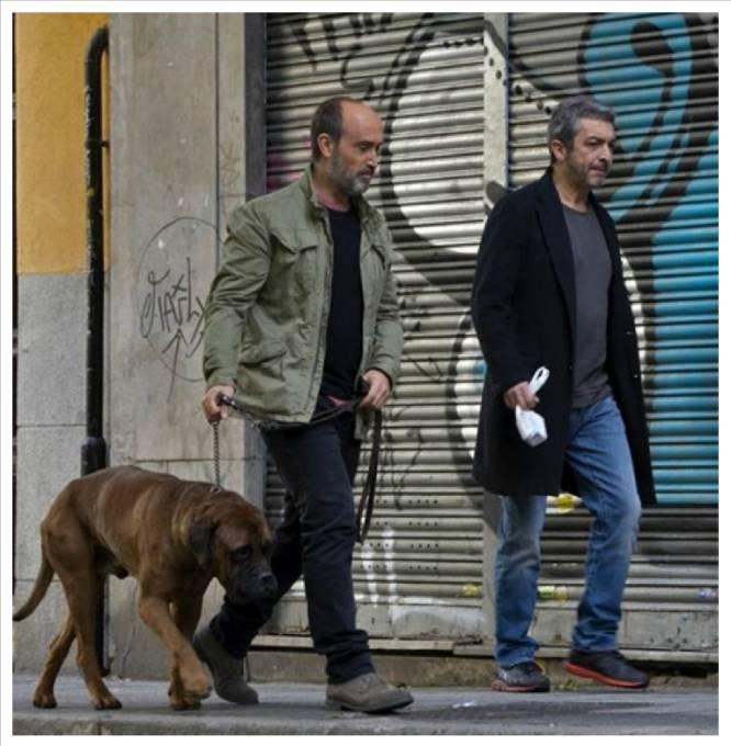 """Una España que se puede recorrer saltando de caca de perro en caca de perro es ya, afortunadamente, un paisaje del pasado. Tanto el mobiliario urbano como la legislación han actuado en los últimos años para que las heces caninas desaparezcan de calles y parques. En 2001 se instalaban en Madrid los conocidos como """"sanecanes"""", envases con un dispensador de bolsas para los desechos de los animales. Según la ciudad, las multas eran diferentes. En el año 2015 la oscilación era sorprendente: de 60 euros de multa en Alcobendas (Madrid) a 3.000 en Barakaldo (Vizcaya). Ese mismo año Xátiva (Valencia) imponía un sistema mucho más moderno que ahora se plantea en otras ciudades: tener un registro de ADN de los perros para poder multar sin que haga falta que la autoridad sea testigo del desliz. La alcaldesa de Madrid, Manuela Carmena, está estudiando implantar la misma medida en la capital, donde  según el último censo de animales domésticos  viven 281.339 perros. En la imagen, Javier Cámara y Ricardo Darín en 'Truman' (2015)."""