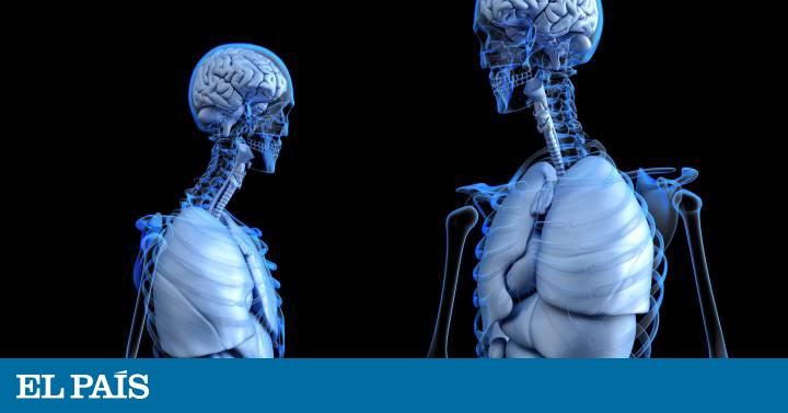 Intersticio Descubierto Un Nuevo órgano Gigante Que No Se Ve Bajo El Microscopio Ciencia El País
