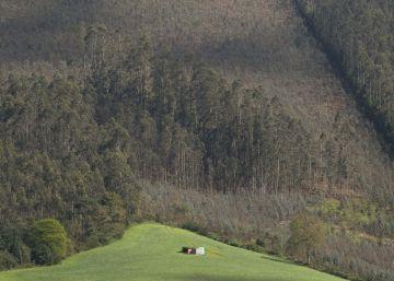 El plan forestal de la Xunta prevé duplicar la producción de madera