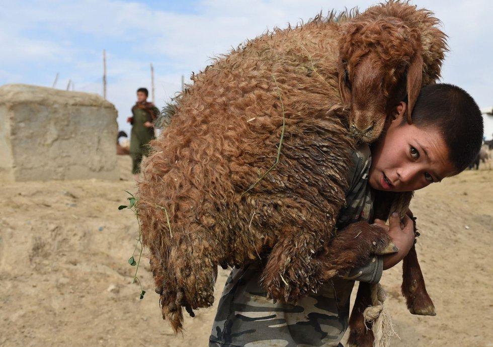 Un niño transporta una oveja sobre sus hombros en un mercado de ganado en Kabul (Afganistán), el 22 de septiembre de 2015.