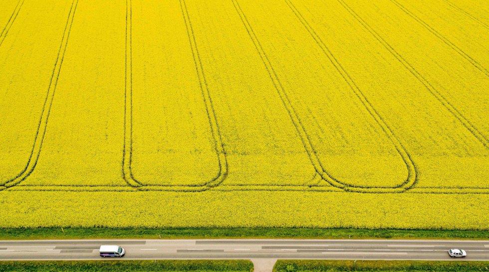 Vista aérea que muestra carriles hechos por maquinaria agrícola en un campo de colza en Zorbau (Alemania).